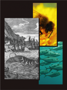 Depiction of 1800's whaling, fish in the ocean, bee with a flower.