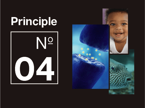 Principle of better thinking 04: Learn to learn like a baby.